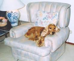 cão no sofa