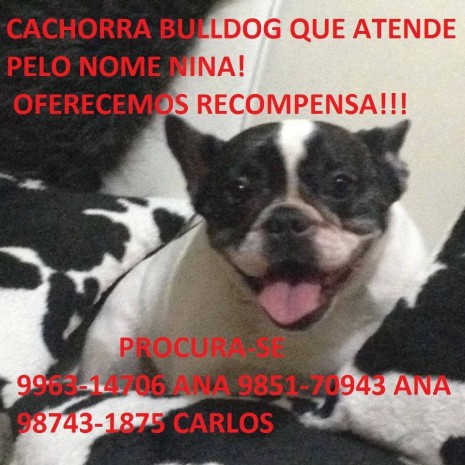 cachorra do Luca 11707507_10200618641186021_5897247012856956843_n