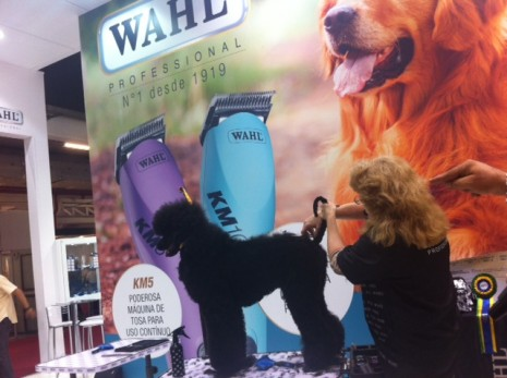 Pet South America wahl