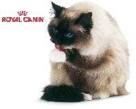 Royal Canin GetAttachment